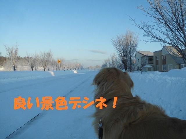 CIMG4356_P.jpg