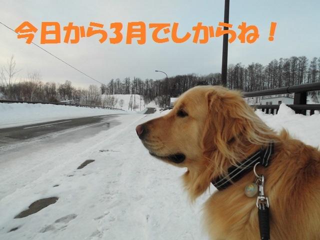 CIMG4369_P.jpg