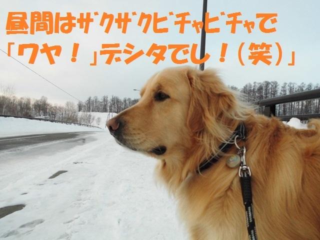 CIMG4370_P.jpg