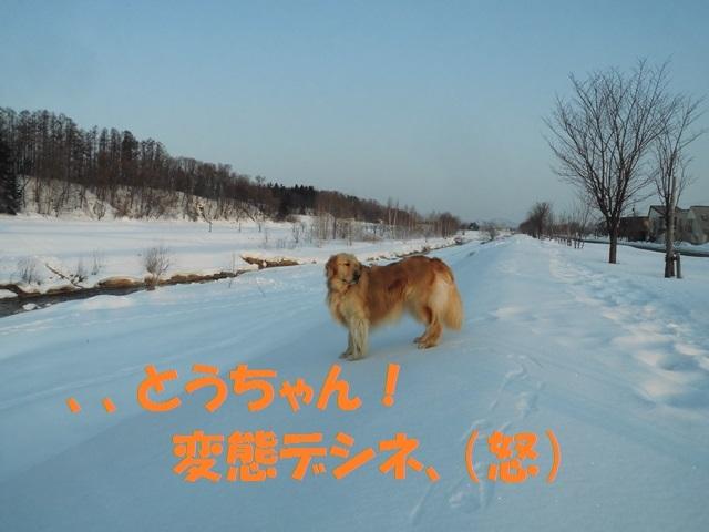CIMG4476_P.jpg