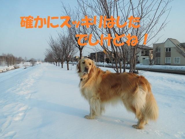 CIMG4478_P.jpg
