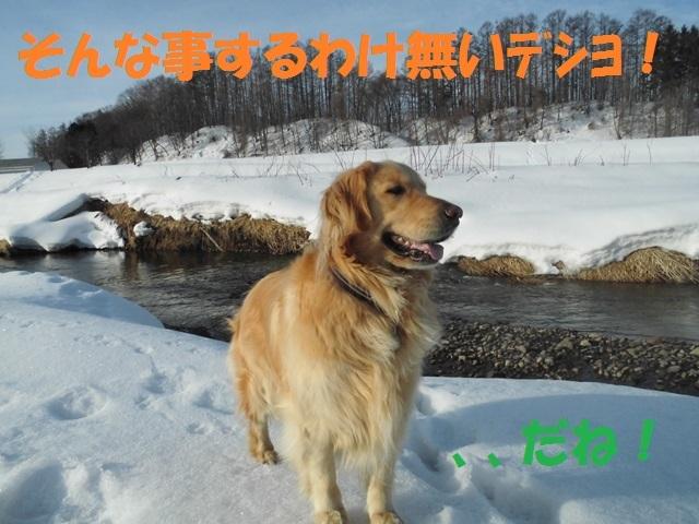 CIMG4526_P.jpg