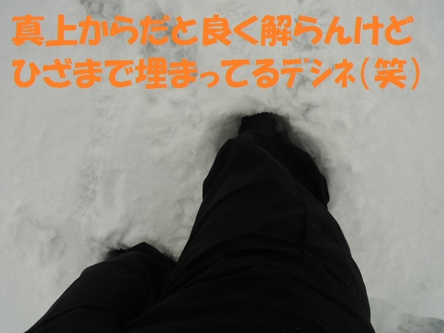 CIMG4549_P.jpg