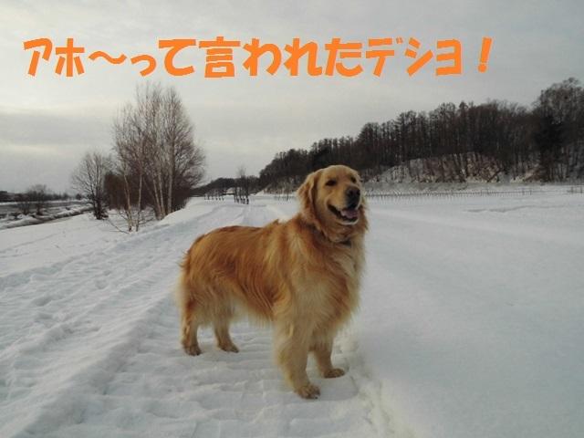 CIMG4563_P.jpg