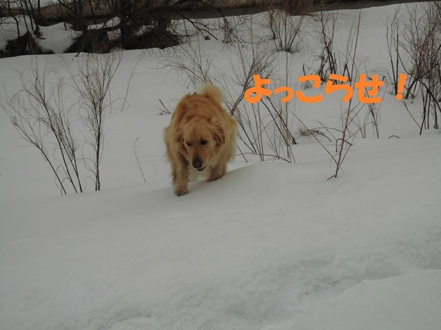 CIMG4595_P.jpg