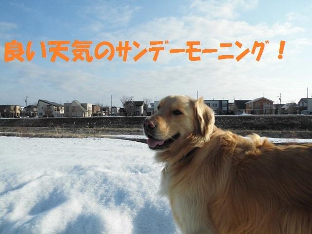 CIMG4611_P.jpg