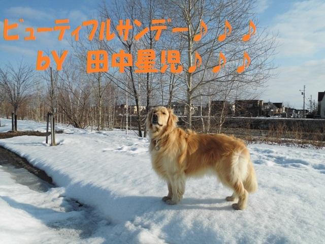 CIMG4612_P.jpg