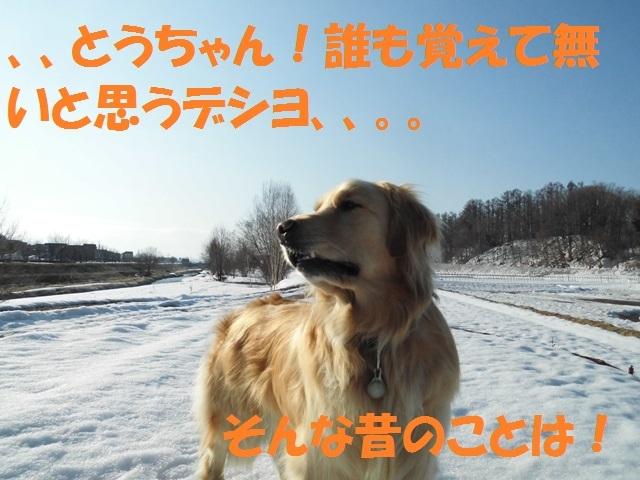 CIMG4617_P.jpg