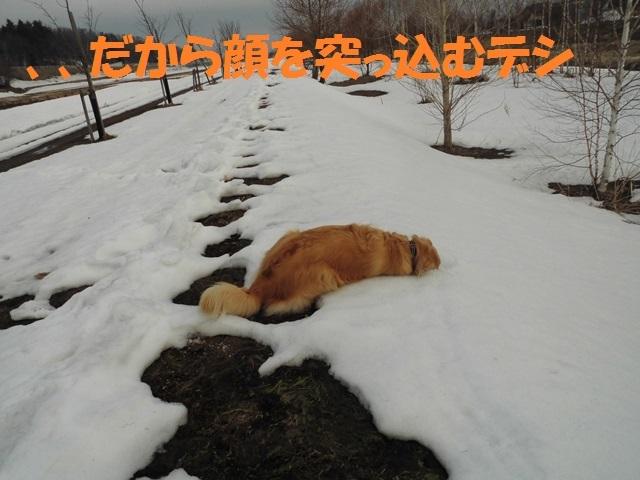 CIMG4623_P.jpg