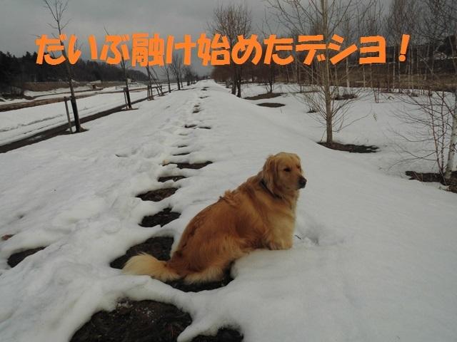 CIMG4624_P.jpg
