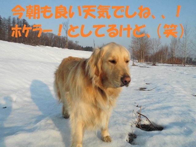 CIMG4630_P.jpg