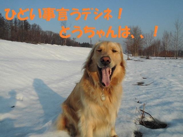 CIMG4631_P.jpg