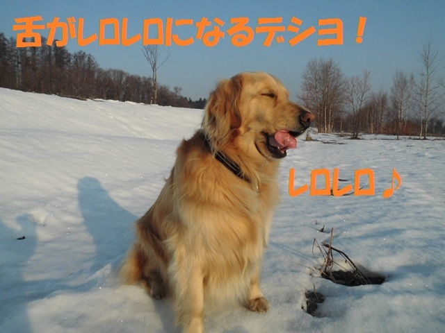 CIMG4632_P.jpg