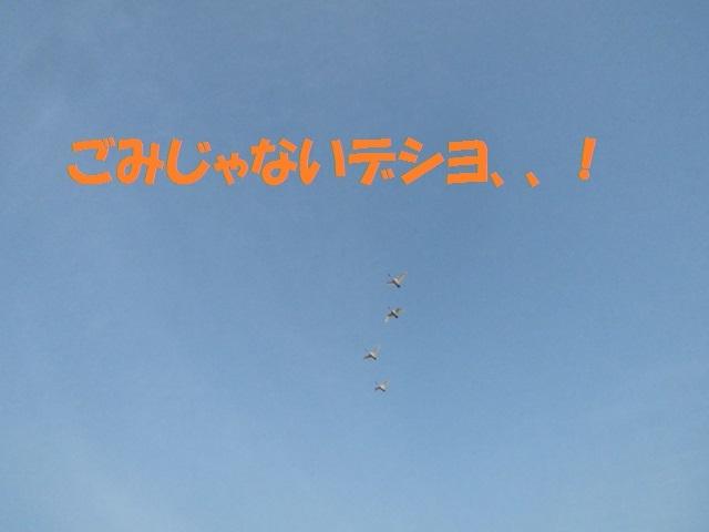 CIMG4635_P.jpg