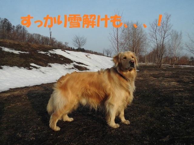 CIMG4638_P.jpg