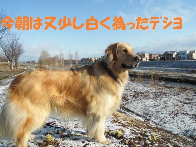 CIMG4654_P.jpg