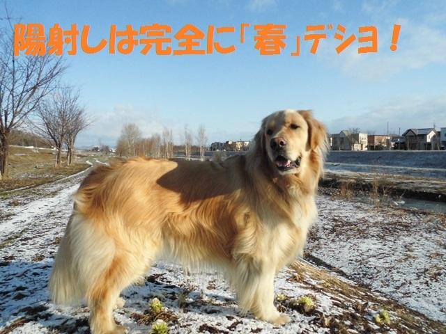 CIMG4655_P.jpg