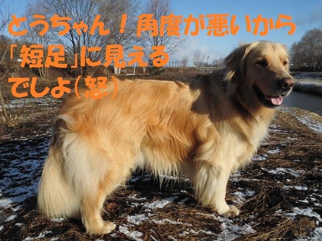 CIMG4658_P.jpg