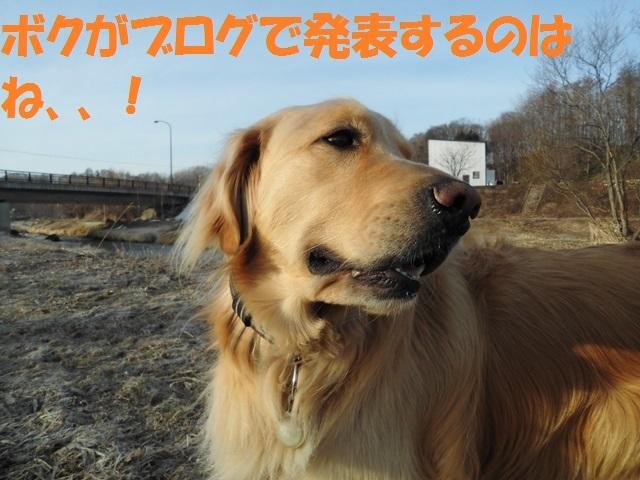 CIMG4660_P.jpg