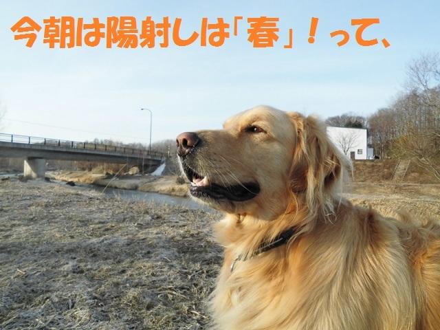 CIMG4661_P.jpg