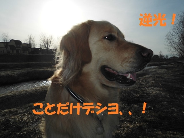 CIMG4668_P.jpg