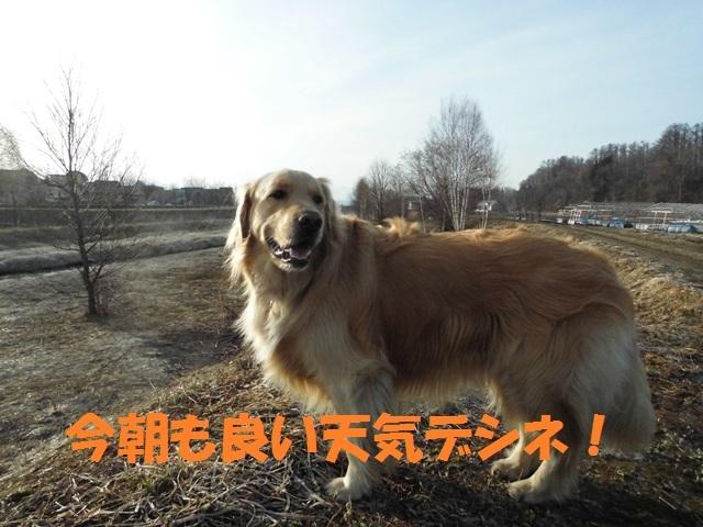 CIMG4670_P.jpg