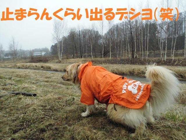 CIMG4676_P.jpg