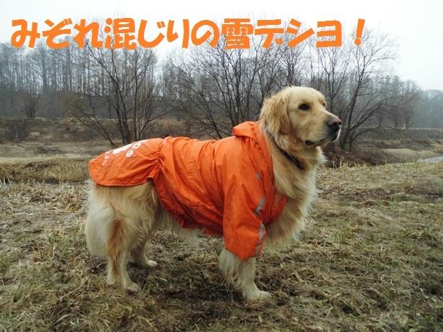 CIMG4681_P.jpg