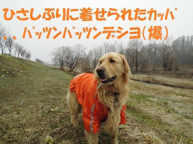 CIMG4683_P.jpg