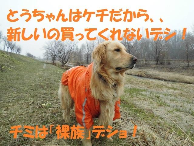 CIMG4684_P.jpg