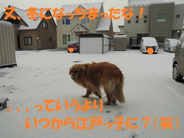 CIMG4685_P.jpg