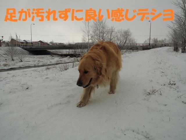 CIMG4687_P.jpg
