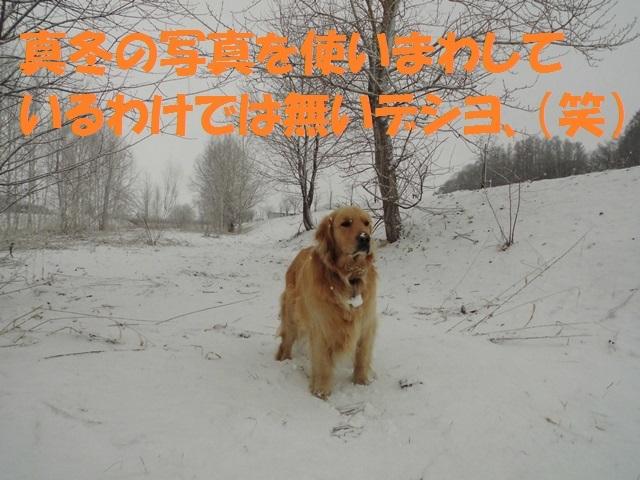 CIMG4692_P.jpg
