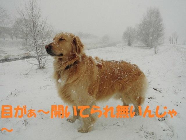 CIMG4696_P.jpg