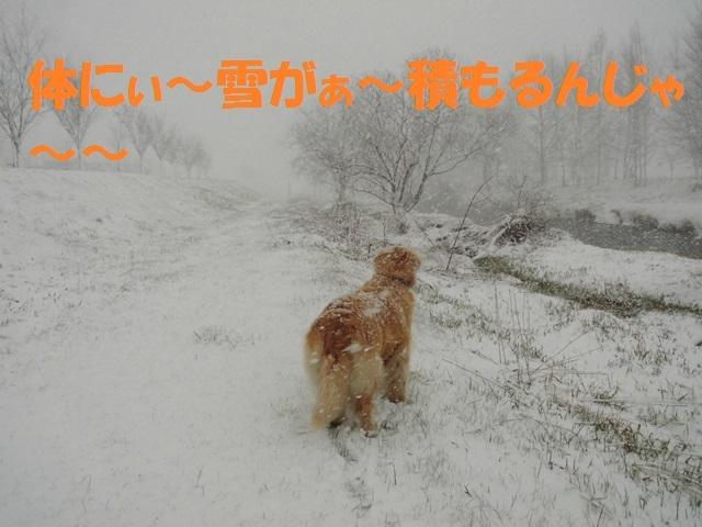 CIMG4698_P.jpg