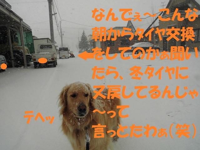 CIMG4701_P.jpg