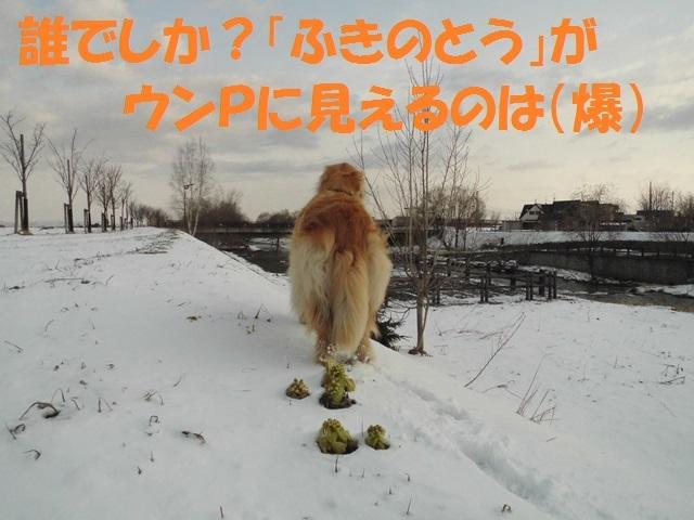 CIMG4709_P.jpg