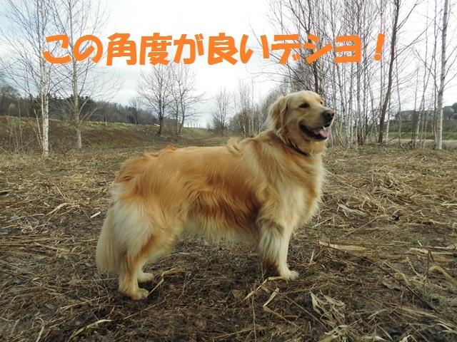 CIMG4727_P.jpg