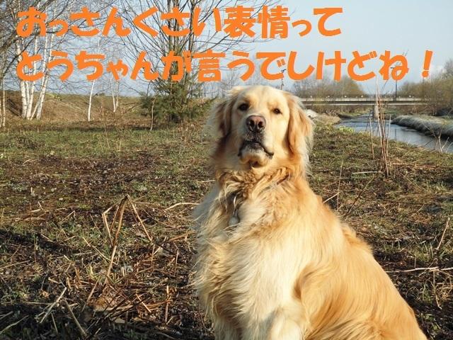 CIMG4757_P.jpg