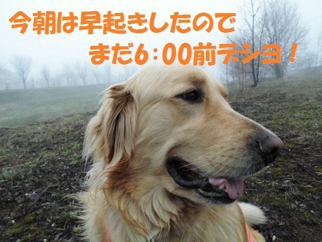 CIMG4771_P.jpg