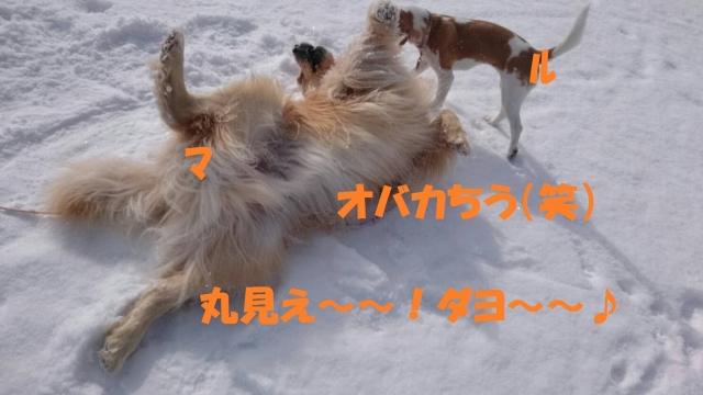 IMG_1598.jpg