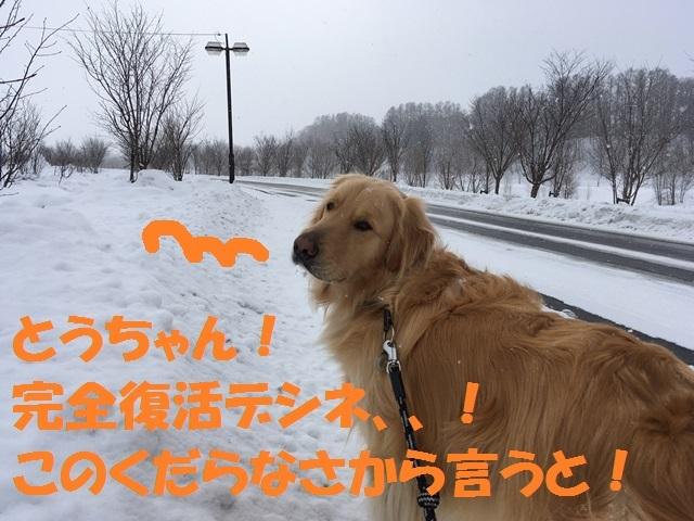 IMG_1689_P.jpg