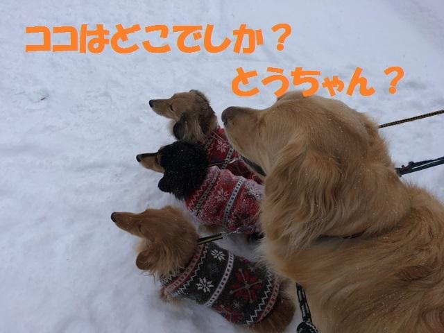 IMG_1765_P.jpg