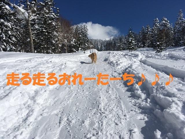 IMG_2084_P.jpg