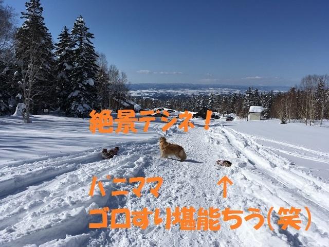 IMG_2117_P.jpg