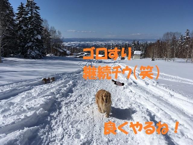 IMG_2121_P.jpg