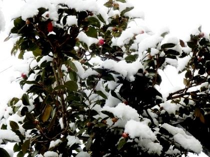 雪の朝 (7)