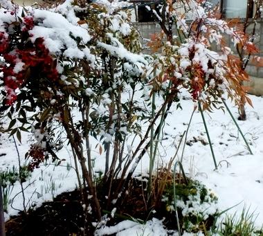 雪の朝 (18)