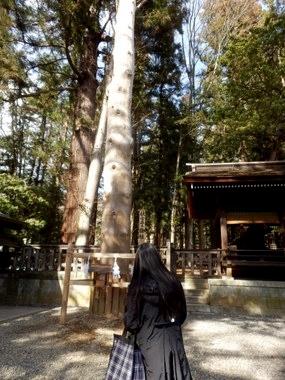 しんゆ (157)