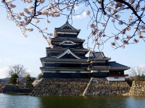 松本城夜桜 (2)